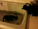 All of my cats have loved drinking from the tub.