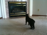 Oscar spies another cat in the glass of the fireplace.