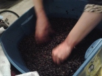 This is a very hands on process.  I can squeeze any grapes that haven't been crushed as I find them this way.