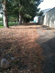 The pine tree lined walk after the dumpster smells much better.