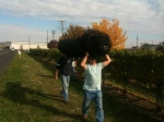 Sean and Tim carrying one of three rolls of bird netting to be picked up later.