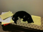 Dragon helping me study - had to put him in my blog despite posting this pic on Facebook.