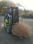 Good year for growing tumbleweed and we had the wind to break it loose.