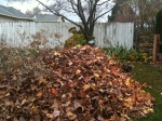One of three piles of leaves in our back yard.  Fun Fall day with my daughter!