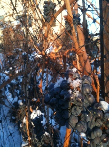 Frozen Cabernet Sauvignon grapes.