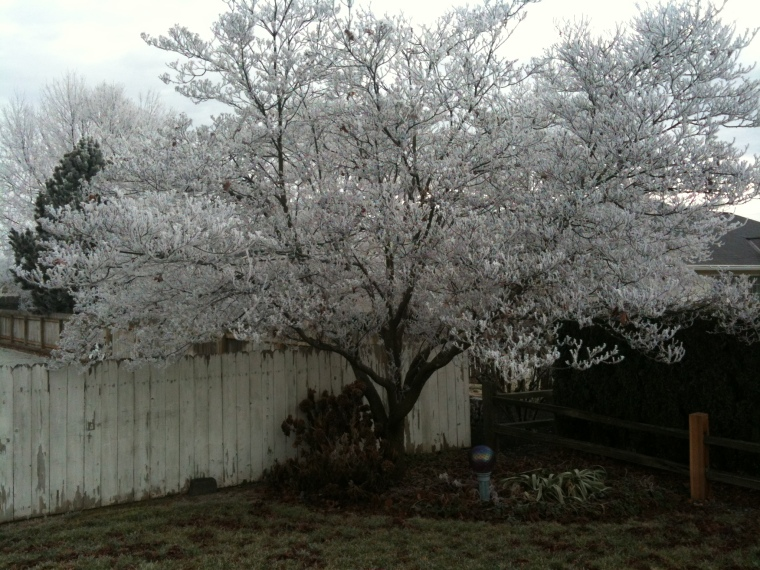 Happy New Year from frozen, but not snowy Walla Walla.