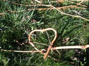 One cane pulled over on itself by its tendrils to form a heart.
