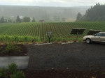 Solar panels, vineyards and Cascade Mountain foothills, from the relatively dry porch at Sokol Blosser.