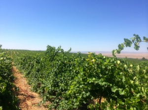 Columbia Valley AVA, touring the vineyards in preparation of harvest.