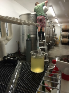 #16: 1:30 AM, the crush pad and equipment is clean, we took a sample of the juice to bring to the Lab for analysis, and Jason is inoculating the Sauvignon Blanc.