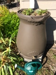 Two new rain barrels - we had enough rain to water the changed plantings today.