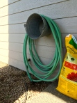 Finally hanging the hose so we can walk passed the tomato plant that is taking over the left side of this corner.