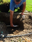 Hiccups along the way - like splitting an irrigation pipe while digging a hole for the blacklace elderberry.