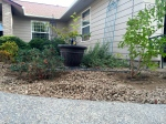 We removed so many spirea from this bed last summer!  Rearranging the plants to begin filling in the big holes today.