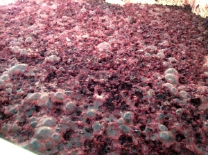 Dolcetto with gas bubbles from the yeast consuming the sugars below the cap.
