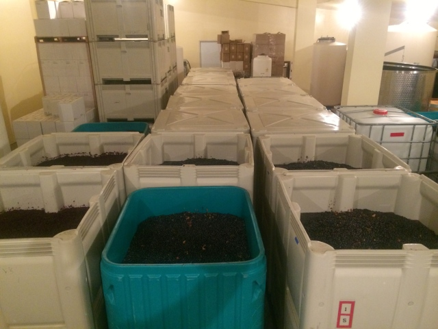 20.2 tons of Mission Hills Estate Vineyard Sangiovese in 14 bins crushed in 11.5 Hours.