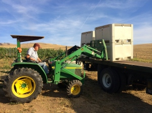 Thankful for the tractor with forks in the Breezy Slope Vineyard - we didn't have to carry the bins by hand.