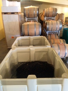 Two tons of Primitivo from Les Collines Vineyard fermenting in front of barreled Sangiovese, Sangiovese Rose', Dolcetto and Cabernet Sauvignon, nice haul for the 2014 Harvest.