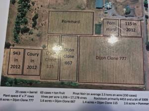 Arbor Brook Vineyards is a dry-farmed vineyard on Dupee sedimentary soils in the Chehalem Mtn AVA.
