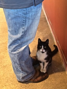 Tippy, the 14 year old winery cat is a lover; she kneaded his cowboy boots as I took her picture.