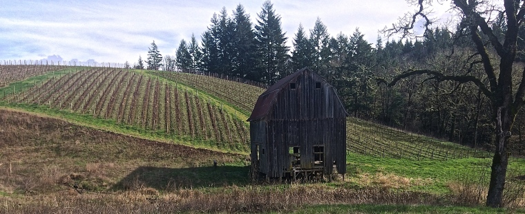 An old barn at the base of the hill as you climb to the tasting room where the view is serene.