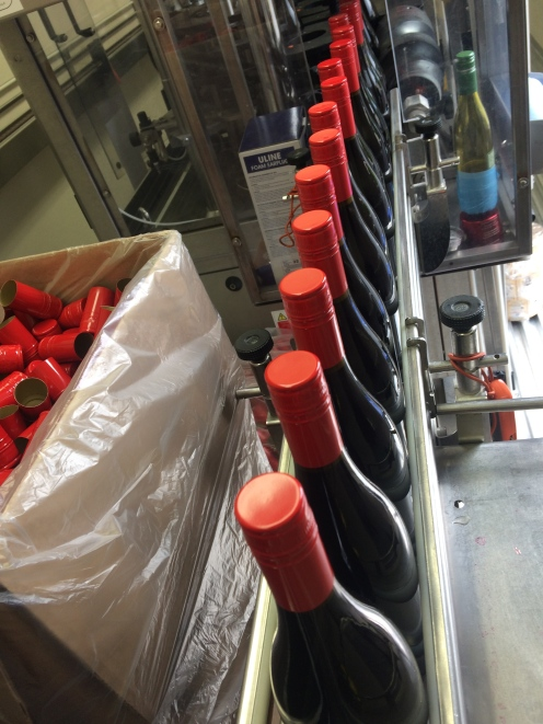 College Cellars Scholarship Red, the last of the bottling for this academic year.