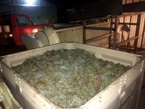 It was quite dark when we began pressing Sauv Blanc for Lagana Cellars.