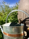 Rain barrel filling a watering can with mint behind.