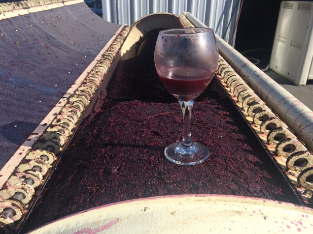 Pressed dry, the Dolcetto pomace supports a glass of pressed wine; still pretty cloudy.