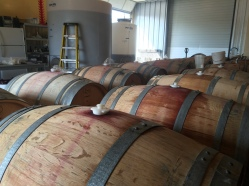 Barreling Sangiovese wine from tank at Locati Cellars.
