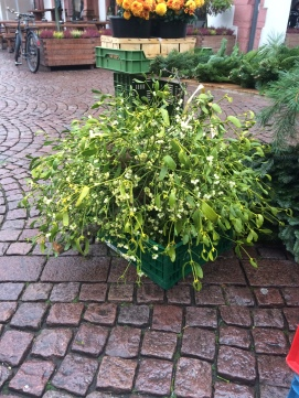 Mistletoe, the real thing, for sale in Darmstadt, Germany's Christmas Market.