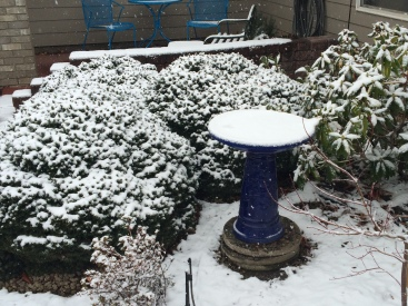 Our winter garden is cheerful on a gray day in its blanket of snow, festive!