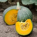 Kabacha squash, photo thanks to dpseeds.