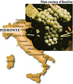 Cal-Italia.com's image of Arneis grapes.