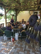 Making Lavender Wreaths