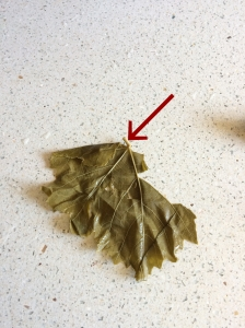 Torn grape leaf and stem to cut off.