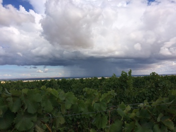 View of the hail and rain pelting Walla Walla from Jon Cockburn Ranch Vineyard.
