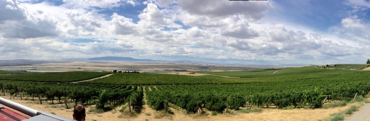 View of Bacchus Vineyard, the Columbia River and Red Mountain AVA in the distant left.