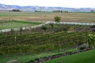Dayal Estate Vineyard is 2 acres of Syrah grapes.