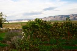 Dayal Estate Vineyard