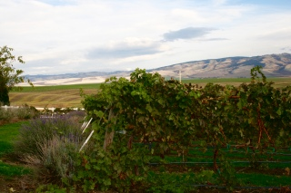 Dayal Estate Vineyard