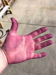 Stained hands from wine making.