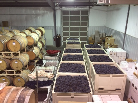 Locati Cellars Barbera ready to crush.