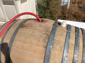 Hydrating barrels for Sangiovese wine.