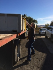Delivery of the Dayal Vineyard Syrah.
